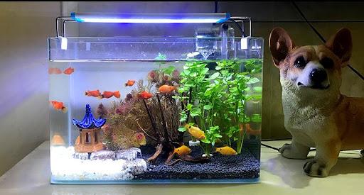 鱼缸与家居风水的关联