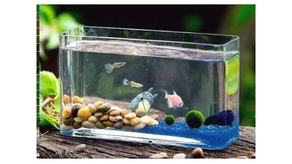 如何看金鱼缸风水?
