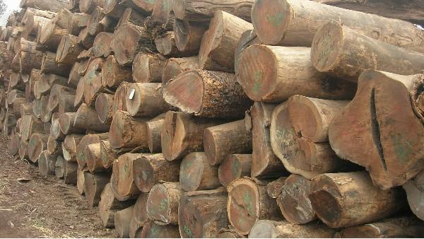 原木行业发展前景及现状分析