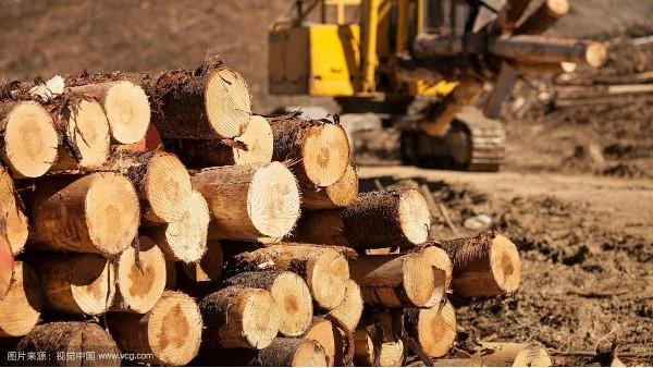 疫情时代下我国木材行业如何发展?
