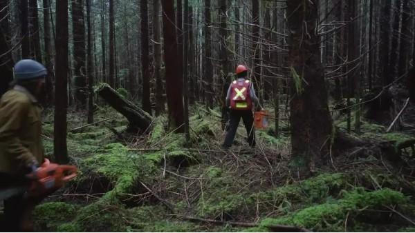 中美木材需求大涨,欧盟计划到2030年种植30亿棵树