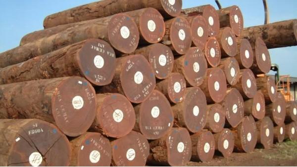 俄勒冈州森林计划可能会使木材采伐量减少30%
