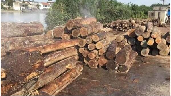 林业会被大力推广木材建筑破坏吗?