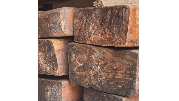 缅甸柚木树的特征