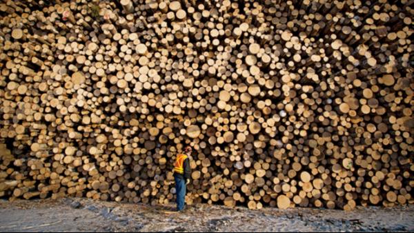 逐渐枯竭的出口:缅甸森林资源