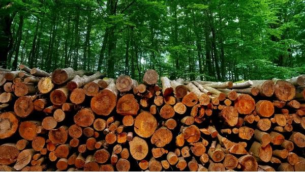 德国原木出口总值25亿欧元,中国竟是其最大出口市场!