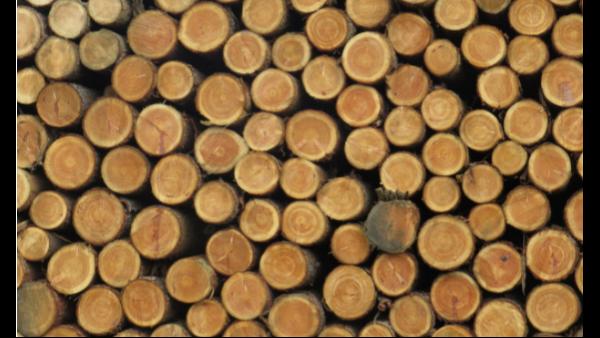 木材含水量