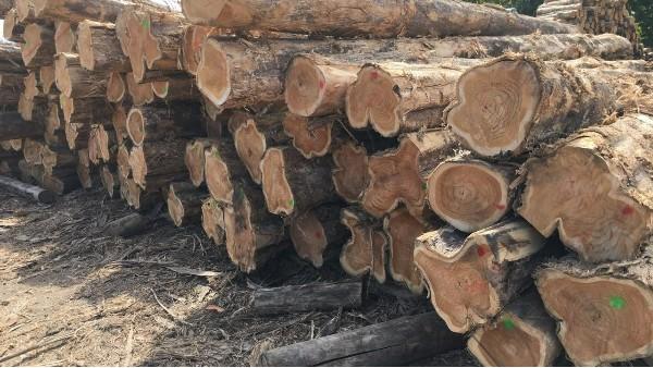 2021年上半年越南木业快速增长