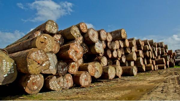 木业现状及未来发展趋势