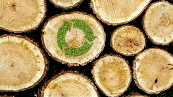全球木材供给真的跟不上暴涨的需求了吗?