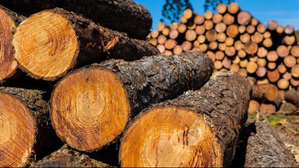美越正式达成结束木材贸易调查协议