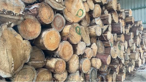 德福林为你介绍日本桧木