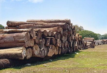 汕头市林氏木业有限公司