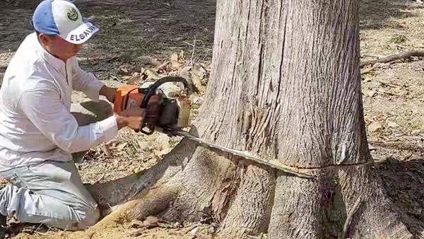 德福林缅甸基地工人正在锯木