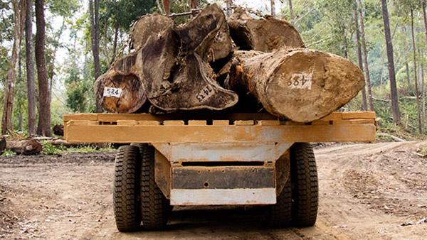 德福林缅甸基地的运输过程