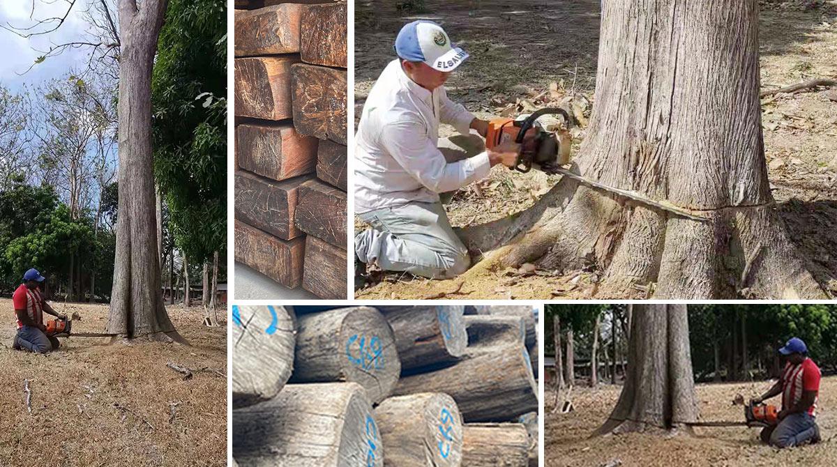 木材取材现场