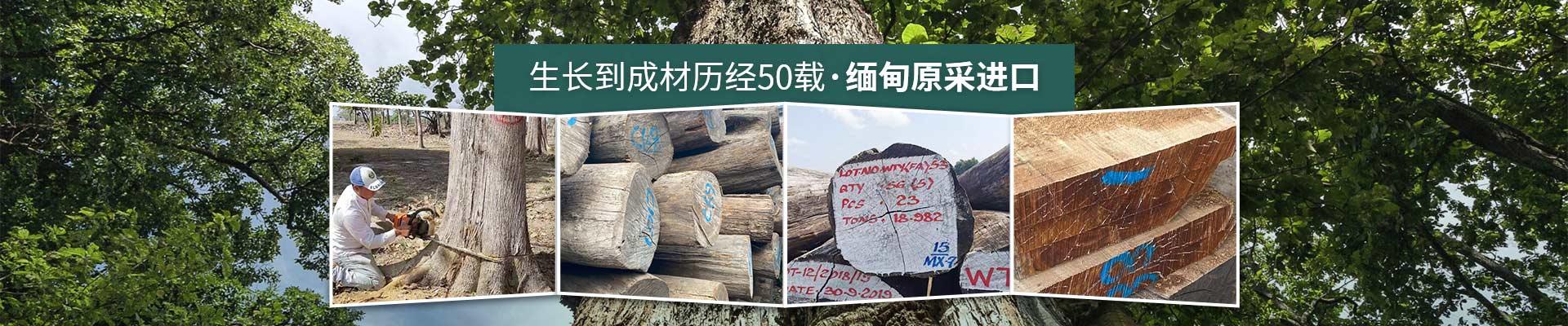 德福林:生长到成材历经50载·缅甸原采进口