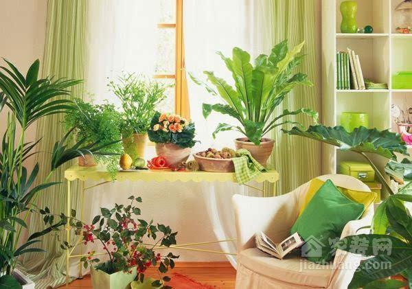 家居植物风水学