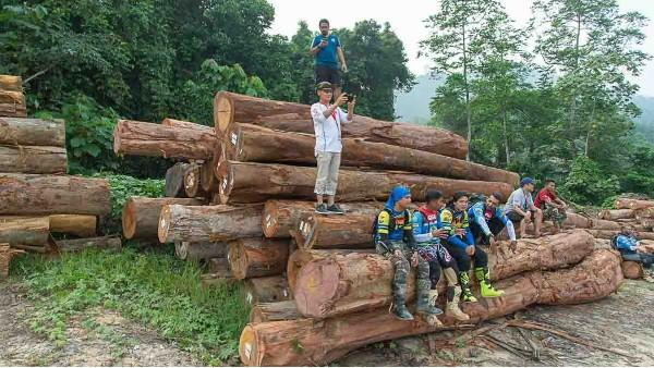 缅甸木材正遭受全方面打击