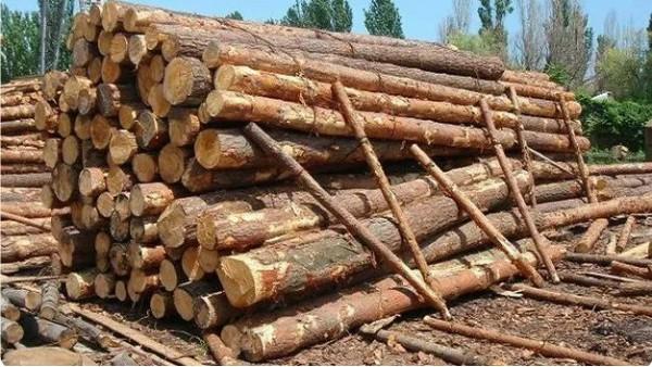 """尼日利亚木材行业把""""中国模式""""作学习对象"""